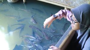 Kolam Katineung, Banyak Ikan Patin dan Gurame