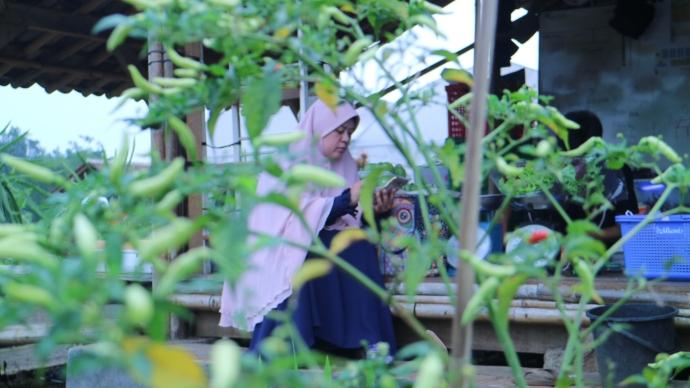 Ummi @ Saung Sabisa Farm